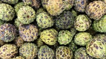 China halts Taiwan sugar apple, wax apple imports to prevent disease